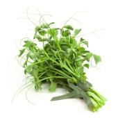 Микрозелень горошка срезанная – ИМ «Обжора»