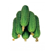 Огірки Джерельце вага – ІМ «Обжора»