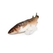 Пеленгас на льду вес. – ИМ «Обжора»