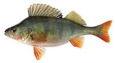 * Рыба Окунь вес – ИМ «Обжора»