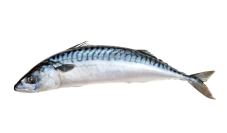 R Рыба Скумбрия  дефростированная – ИМ «Обжора»