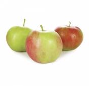 """Яблоки, сорт """"Слава Победителю"""", вес. – ИМ «Обжора»"""