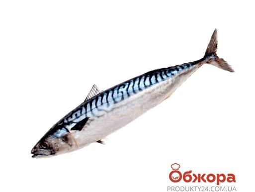 Зам, Скумбрія ваг, 400*600 /глазурь – ІМ «Обжора»
