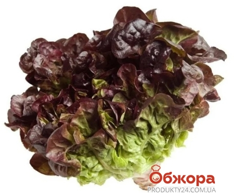 Салат фиолетовый дуболистный в стакане – ИМ «Обжора»