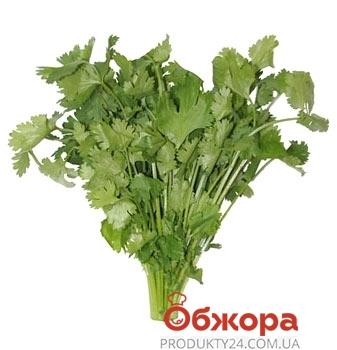 Кинза (пучок) 30 гр. – ИМ «Обжора»