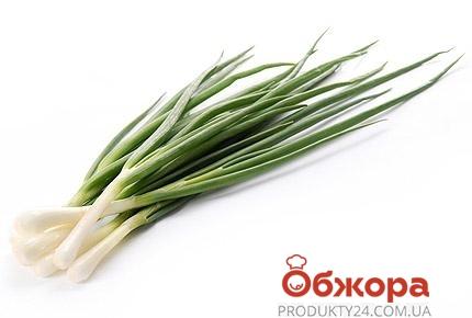 Лук зеленый 50 г – ИМ «Обжора»