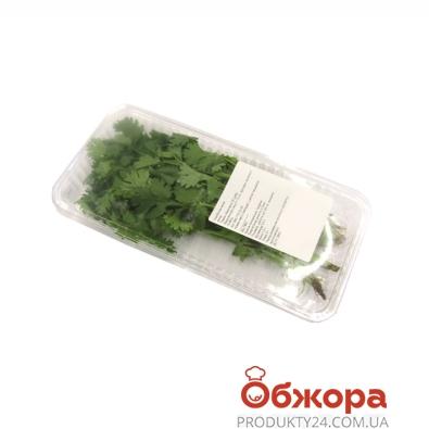 Кинза (коробка) 30 г – ИМ «Обжора»