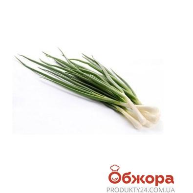 Зелень Цибуля зелена 100 гр – ІМ «Обжора»
