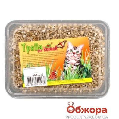 Трава Природа для кошек быстрорастущая – ИМ «Обжора»