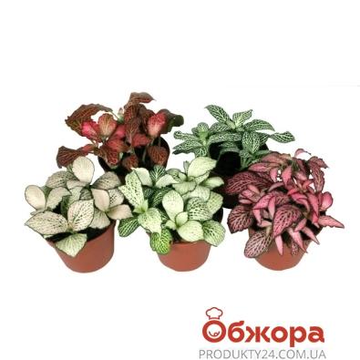 Микс растений 30/8 – ИМ «Обжора»