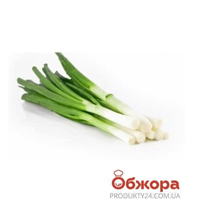 Лук Зеленый  вес – ИМ «Обжора»