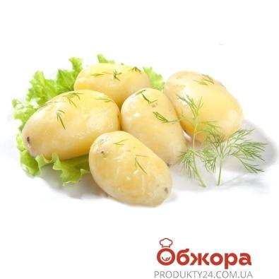 Картофель молодой отварной с зеленью – ИМ «Обжора»