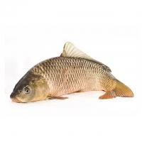 Рыба свежая, соленая, малосольная – интернет-магазин «Обжора»
