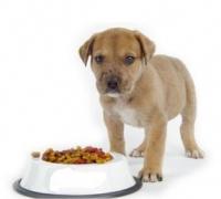 Корм для собак – интернет-магазин «Обжора»