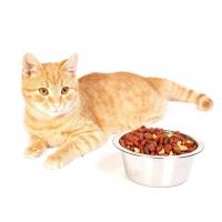 Корм для кошек – интернет-магазин «Обжора»