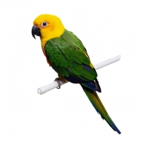 Птицы – интернет-магазин «Обжора»