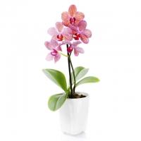 Цветы – интернет-магазин «Обжора»