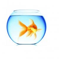 Рыбки – интернет-магазин «Обжора»