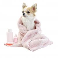 Средства гигиены для кошек и собак – интернет-магазин «Обжора»