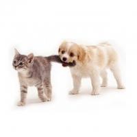 Кошки и собаки – интернет-магазин «Обжора»